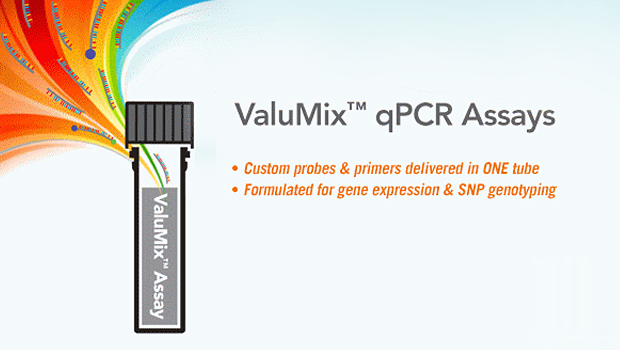 qPCR Probes and Primers – All in ONE Tube