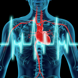Serodus and CRST published results on effects of SER100 in patients with isolated systolic hypertension
