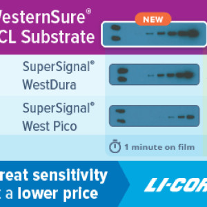 New chemiluminescent substrate offers affordable sub-picogram detection