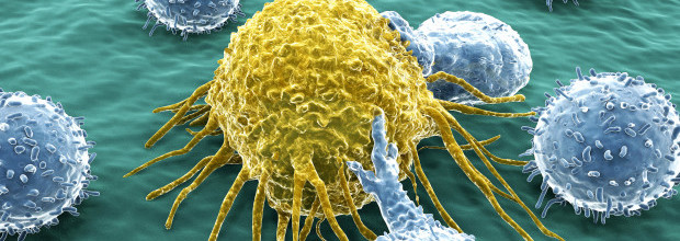 T-lymphocytes attack a migrating cancer cell