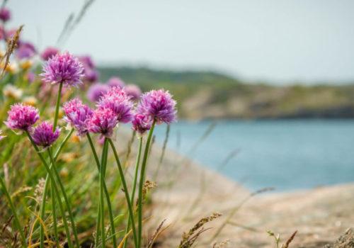 summer-sweden