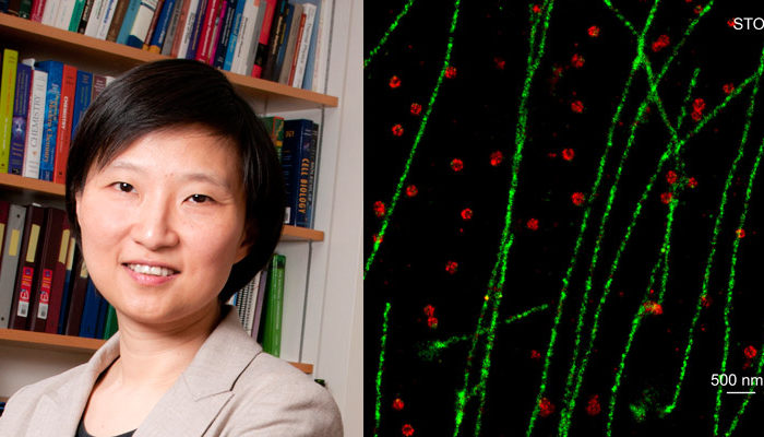 Revealing the beautiful world of cell biology