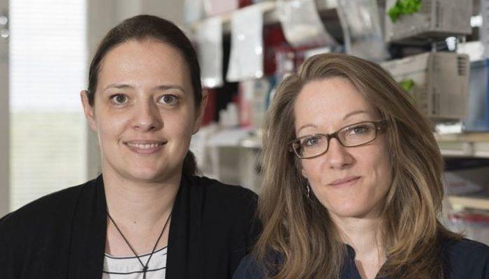 Mechanism behind multiple sclerosis risk identified