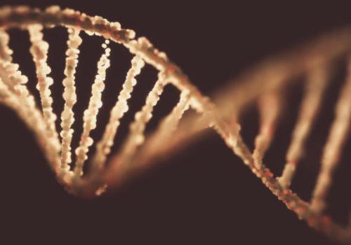 DNA molecule