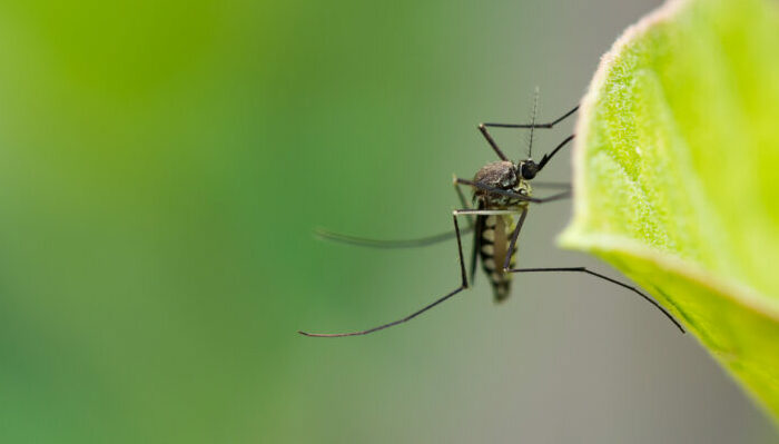 New promising study about malaria