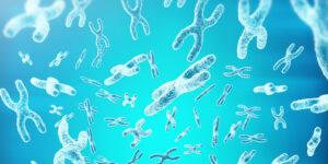 Research breakthrough in sex chromosome regulation
