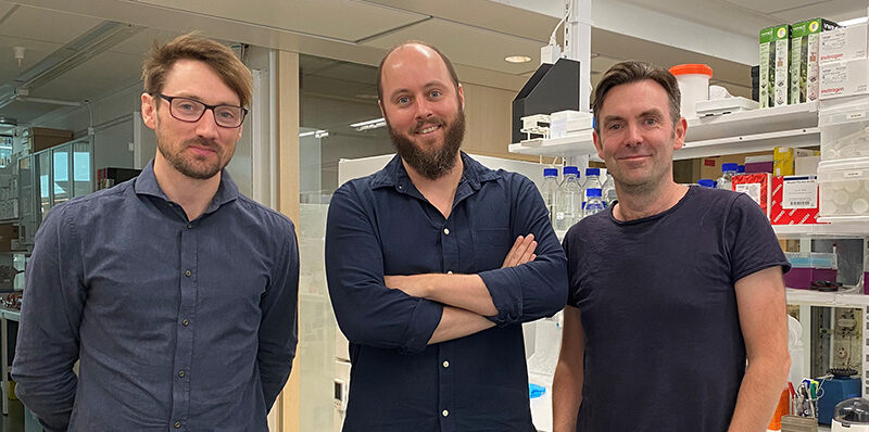 Swedish researchers have identified nanobodies that may prevent COVID-19 infection