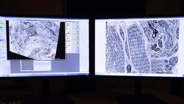 Nordic imaging platforms receive funding