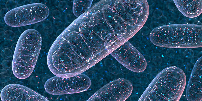 How cells manage oxygen