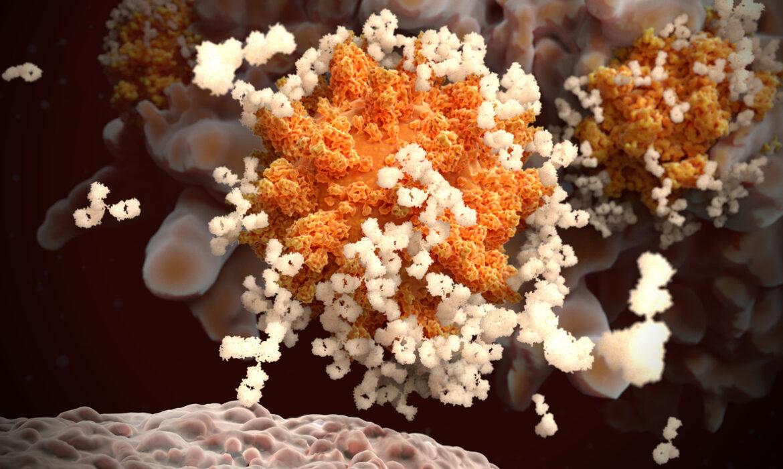 Vaccibody to initiate a phase 1/2 vaccine trial