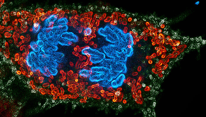 Award: The best in life science imaging