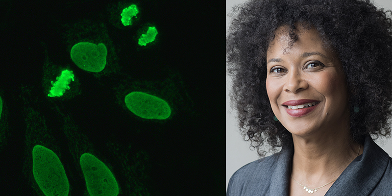 Tara Heitner ISD Immunotech