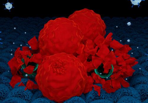 3d render of oncolytic adenovirus destroying cancer cells