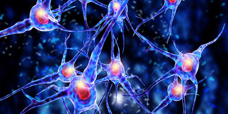 nerve cells istock
